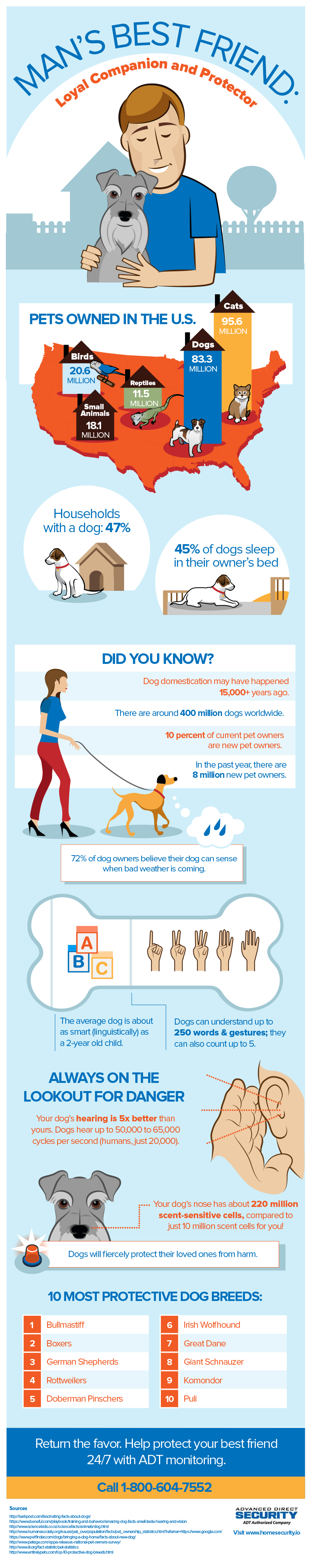 Dog Man's Best Friend Infographic
